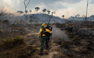 Pantanal in flames: UFF professors explain recent fires and their effects